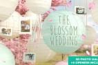 AE模板:浪漫花瓣飞舞灯笼相框婚礼相册图片包装展示