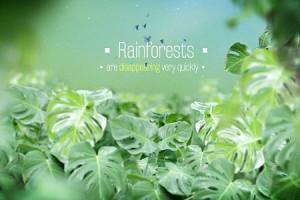 AE模板:热带雨林植物丛林间文字跟踪展示 The Rainforests Titles