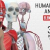AE模板-E3D三维人体解剖模型医疗医学展示动画 Human Body Anatomy 免费下载